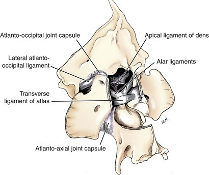 Alar Ligaments