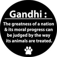 Gandhi Animal Quote