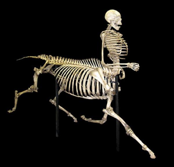 Manimal Spine