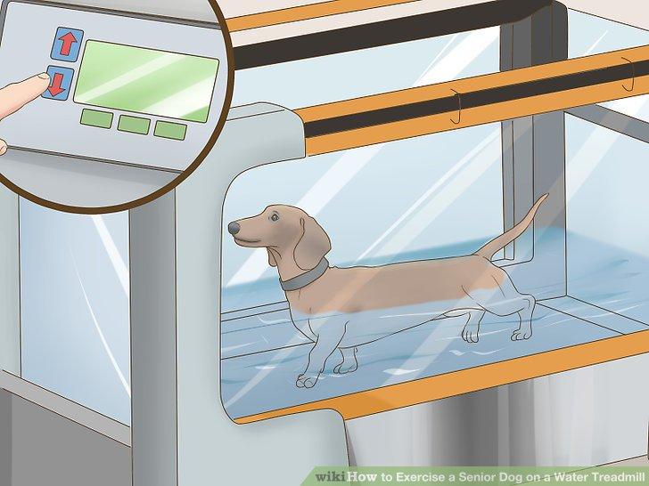 UWT Weiner Dog