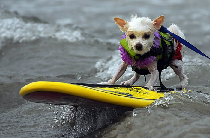 SurfingDog